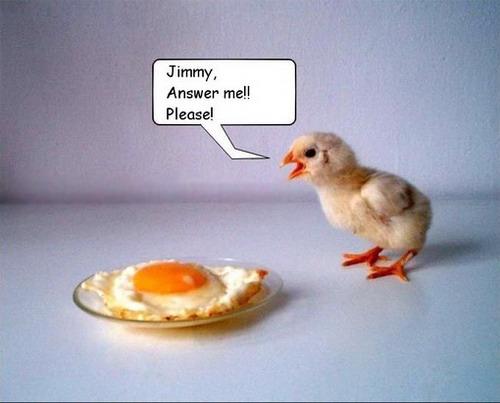 Egg 02