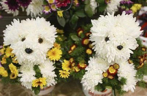 Cute Puppies Made Of White Flowers
