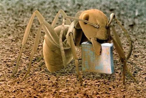 Funny Ant Pictures