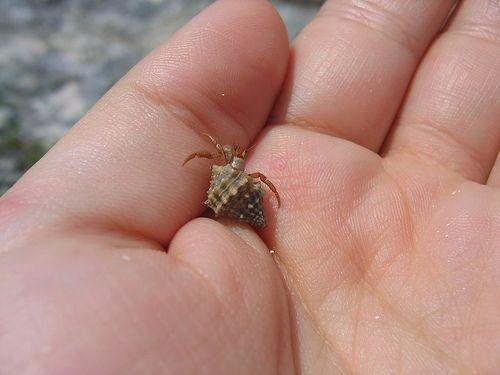 Smallest Creature 06