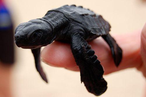 Smallest Creature 11