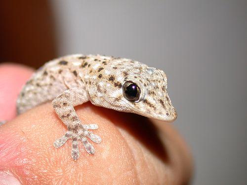 Smallest Creature 12