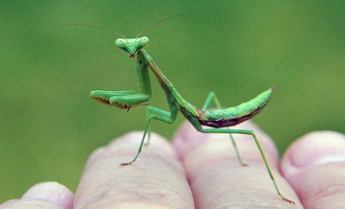 Smallest Creature 14