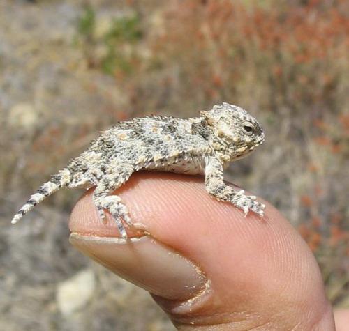 Smallest Creature 15