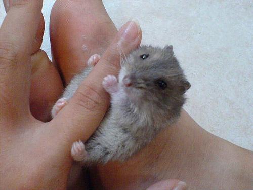 Smallest Creature 17